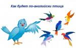 Как будет по-английски птица — примеры перевода, названия разных птиц