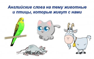 Учим слова на тему животные, птицы, которые живут рядом с нами