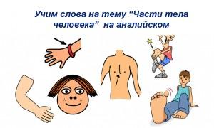 Карточки на тему «Тело человека» на английском языке