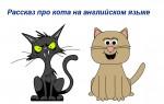 Рассказ про кота на английском языке с переводом — образцы, полезная лексика