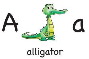 Карточка для детей A alligator