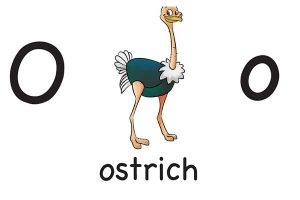 Карточка на английском ostrich