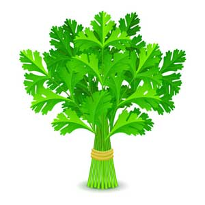 A parsley