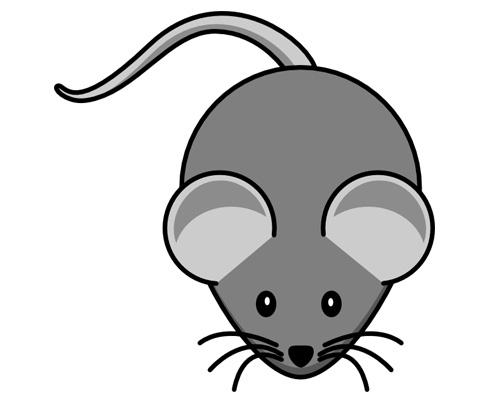 Мышь по-английски - a mouse
