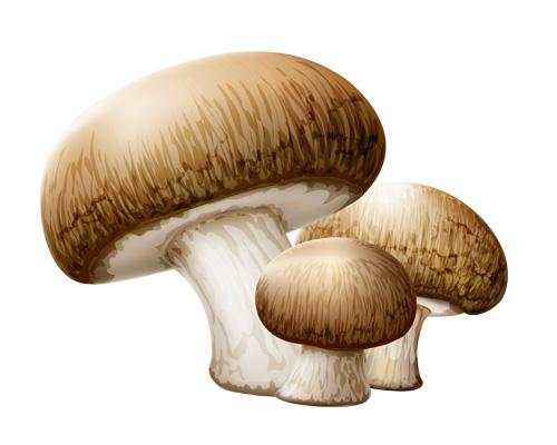"Как будет по английски ""ГРИБЫ"" -mushrooms"