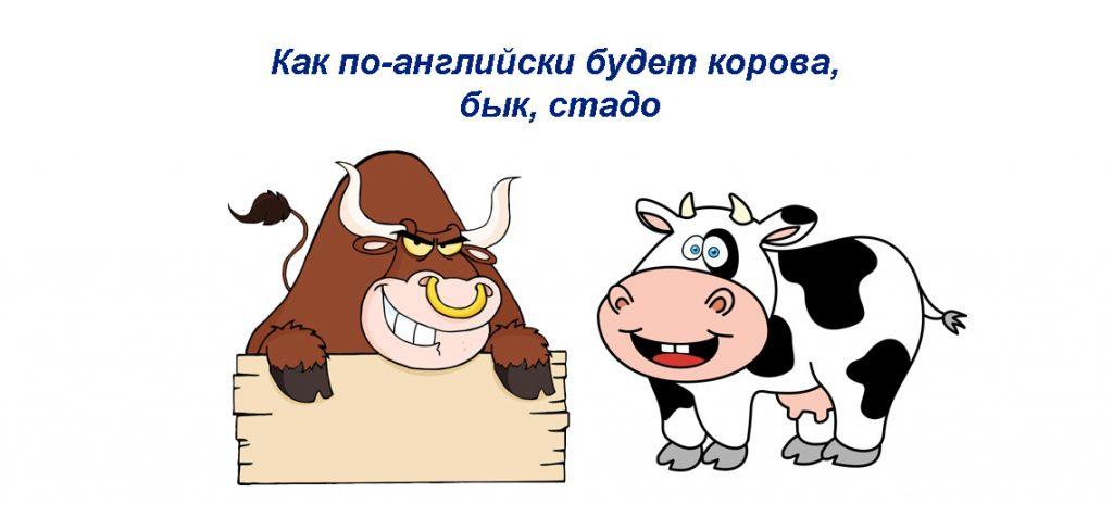 Как по-английски будет корова, бык, стадо