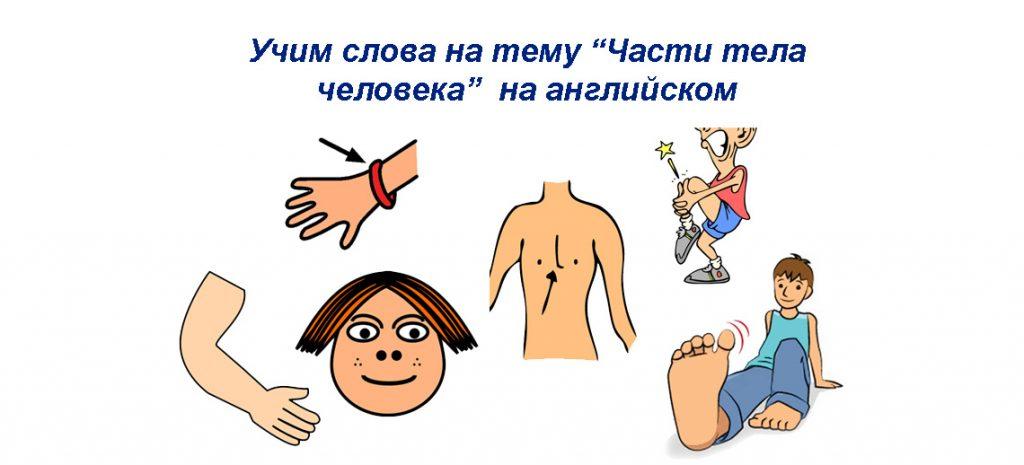 Части тела человека на английском языке - учим онлайн новые слова