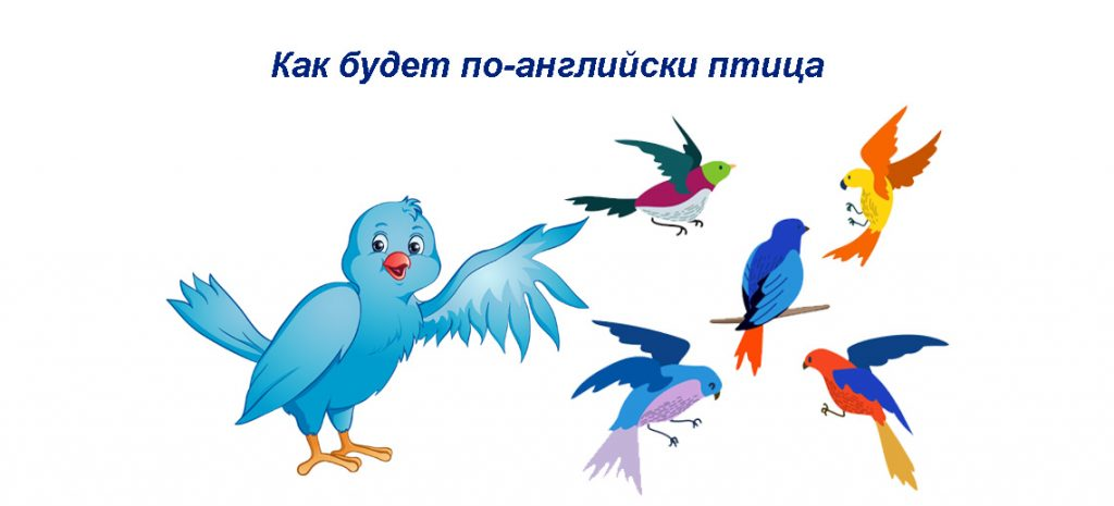 Как будет по-английски птица